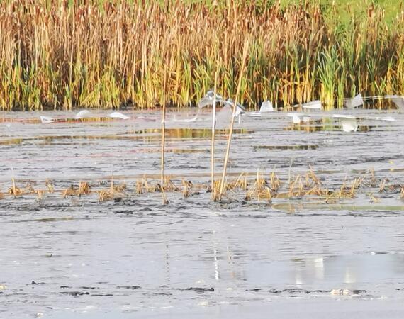 Waterplant.eu